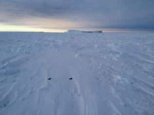 Midnight sun and penguins